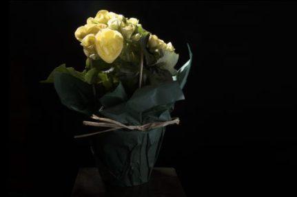low key yelow flower; ©Rene Binder